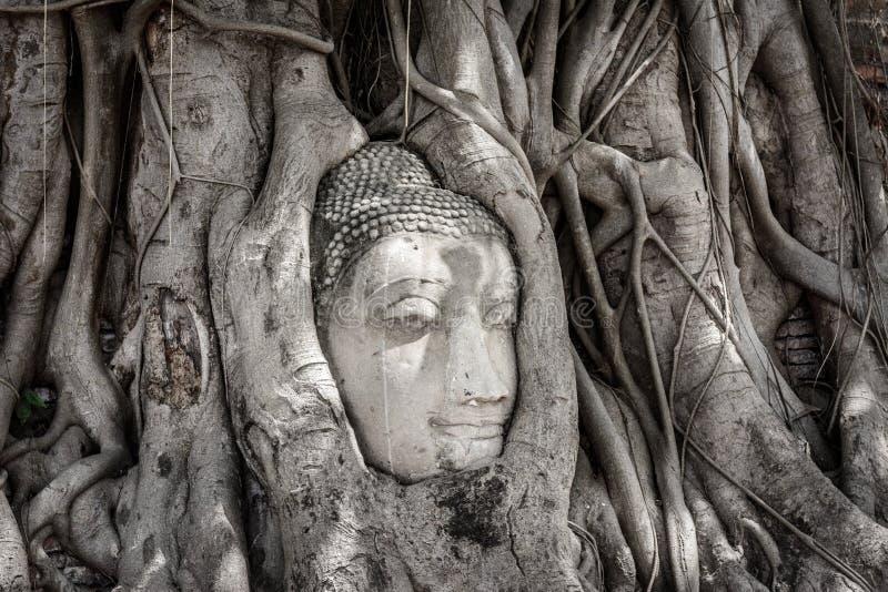 Zijaanzicht van het oude hoofd van Boedha in Banyan-Boomwortel in Wat Maha stock afbeeldingen