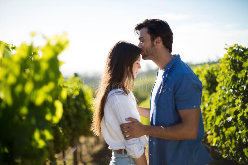 Zijaanzicht van mens het kussen meisjevoorhoofd bij wijngaard stock foto