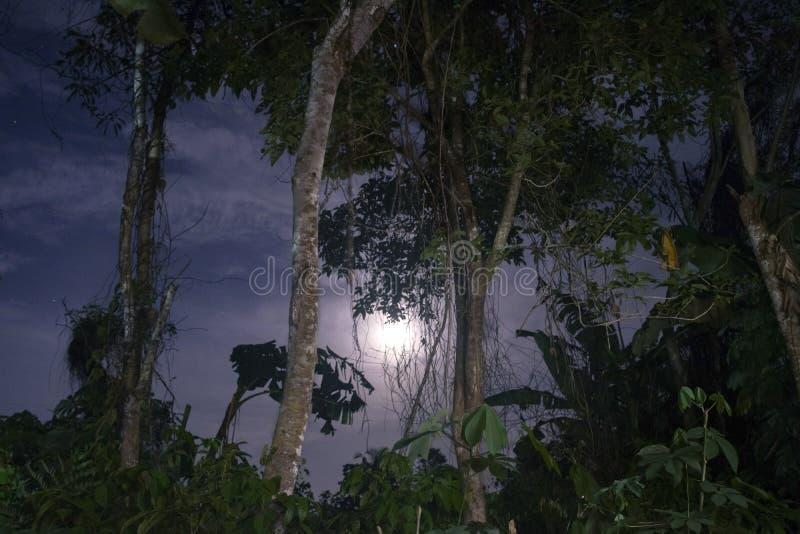 Zijdebomen en de hemel in het nachtschot royalty-vrije stock foto