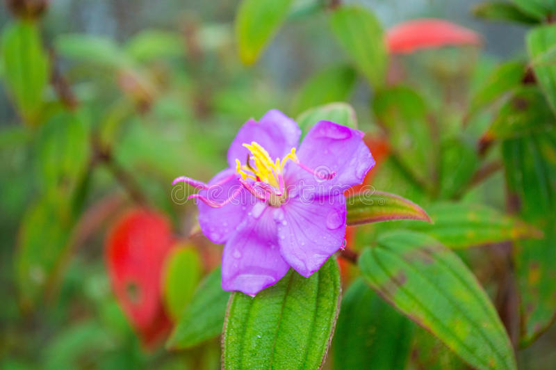 Zijn bloem royalty-vrije stock foto's