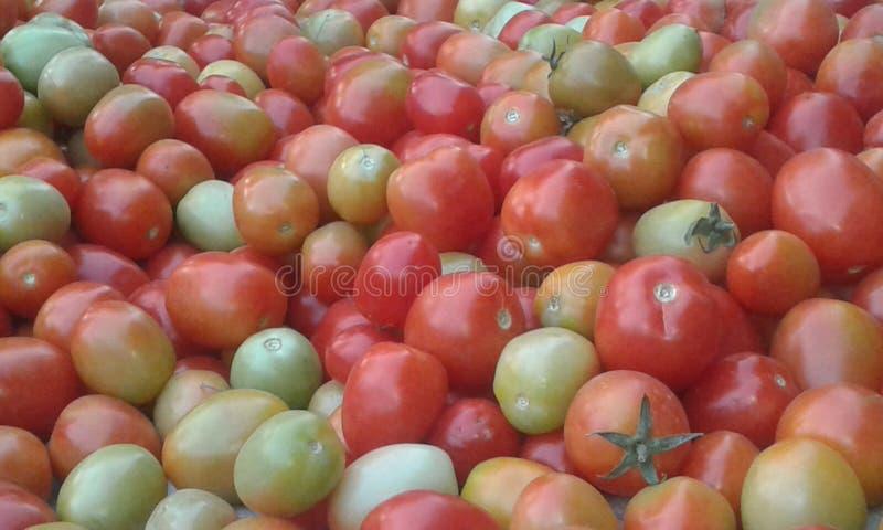 Zijn tomatenfestival stock afbeelding