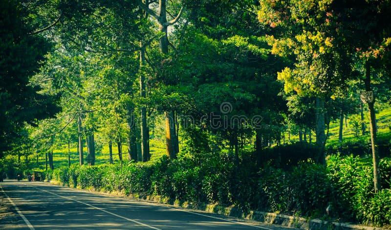 Zijwegasfalt met groene boom en struikmuur aan kant in puncakbogor royalty-vrije stock fotografie