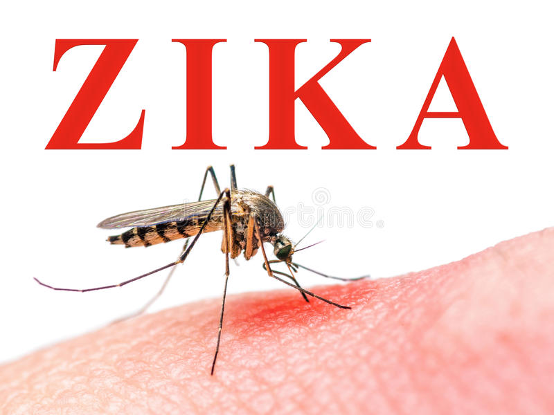 Zika virusmygga arkivbild