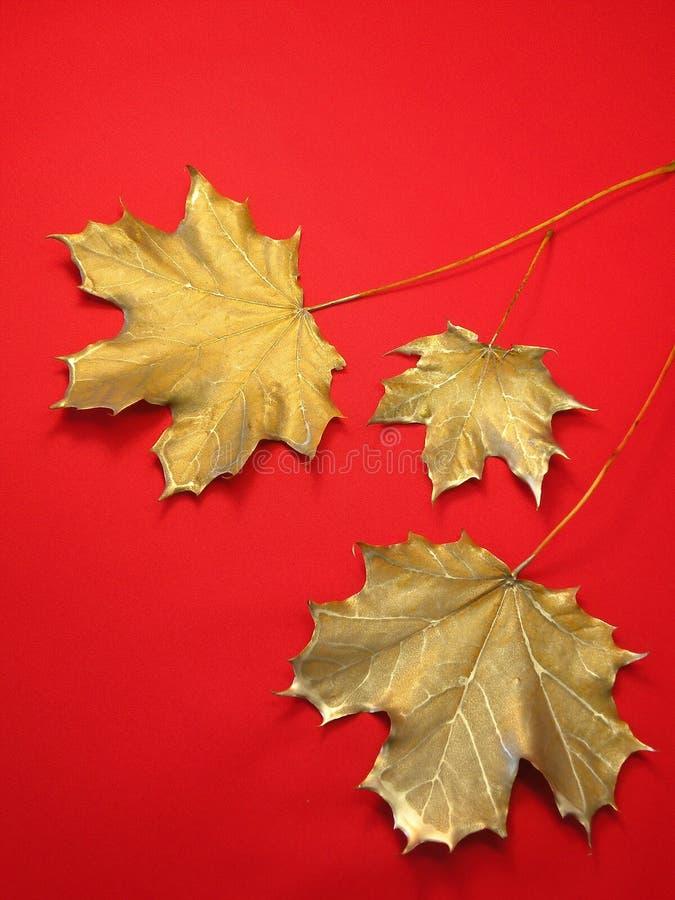 Zilveren esdoornbladeren royalty-vrije stock afbeelding