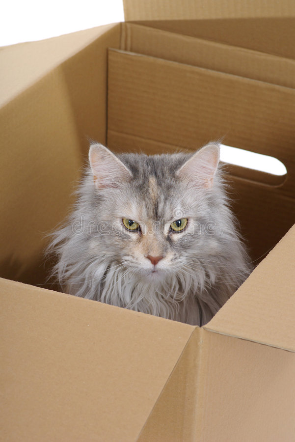 Zilveren kat in document vakje. royalty-vrije stock foto