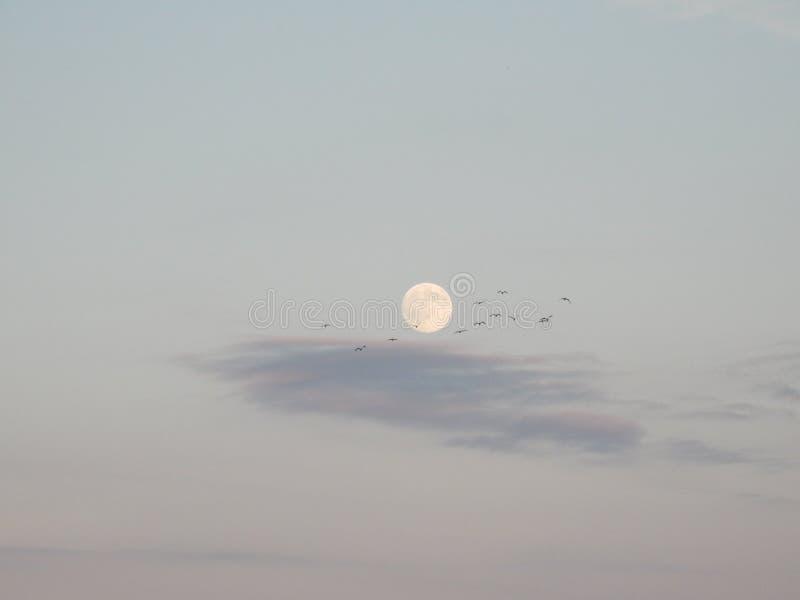 Zilveren maan met vogels stock afbeeldingen