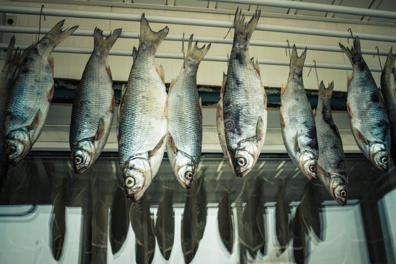 Zilveren vissen, voorn royalty-vrije stock fotografie