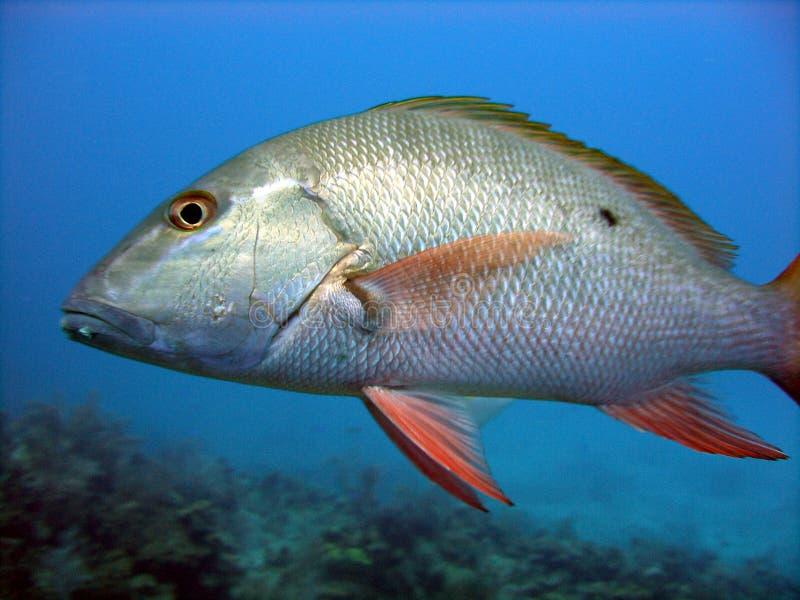 Zilveren vissenschalen royalty-vrije stock fotografie