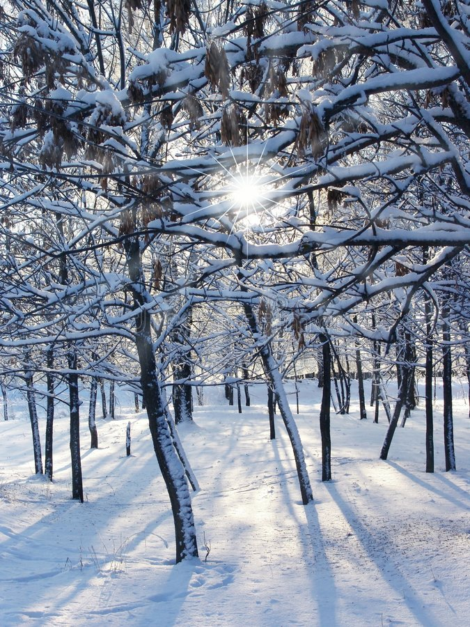 zimą słońce obrazy stock