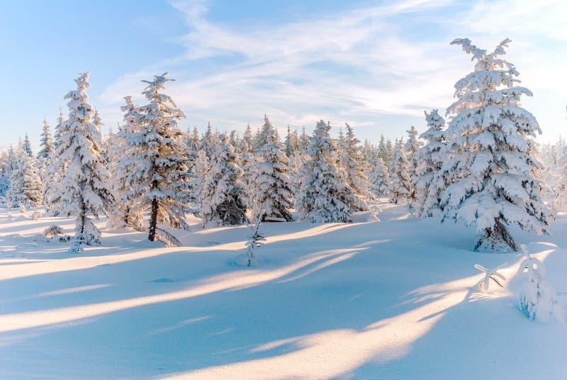 Zim śnieżnych drzew słońca lasowy widok górski obraz stock