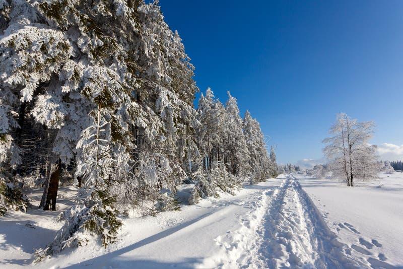 Zim śnieżni drzewa wycieczkuje ścieżkę, Wysocy Fens, Belgia fotografia royalty free