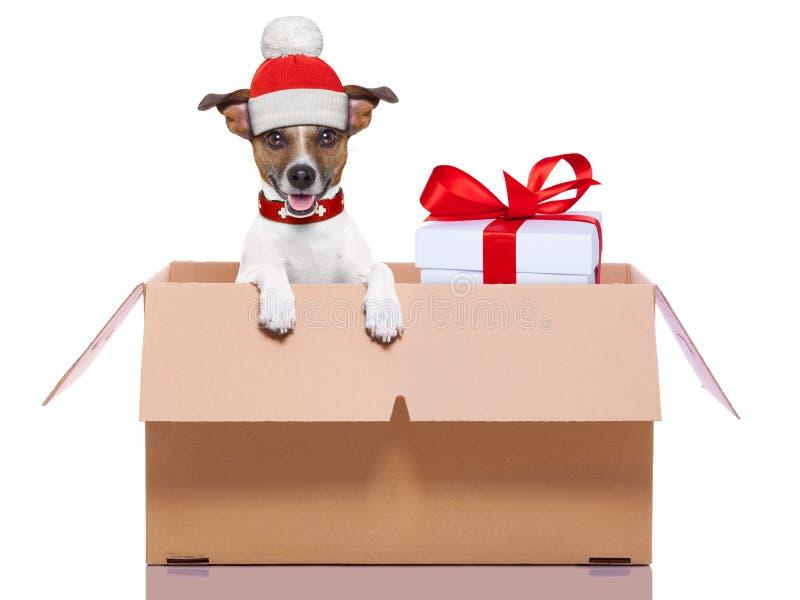 Zim bożych narodzeń pies fotografia royalty free