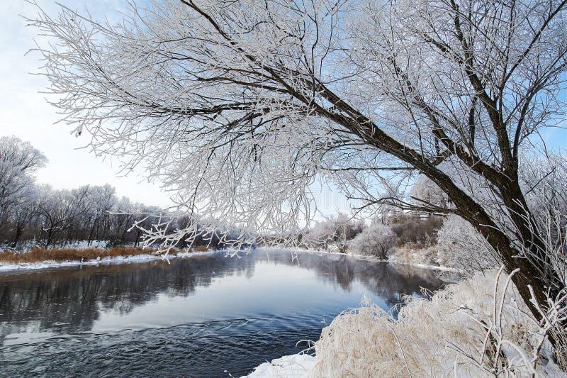 Zim drzew i rzeki sceneria zdjęcia royalty free