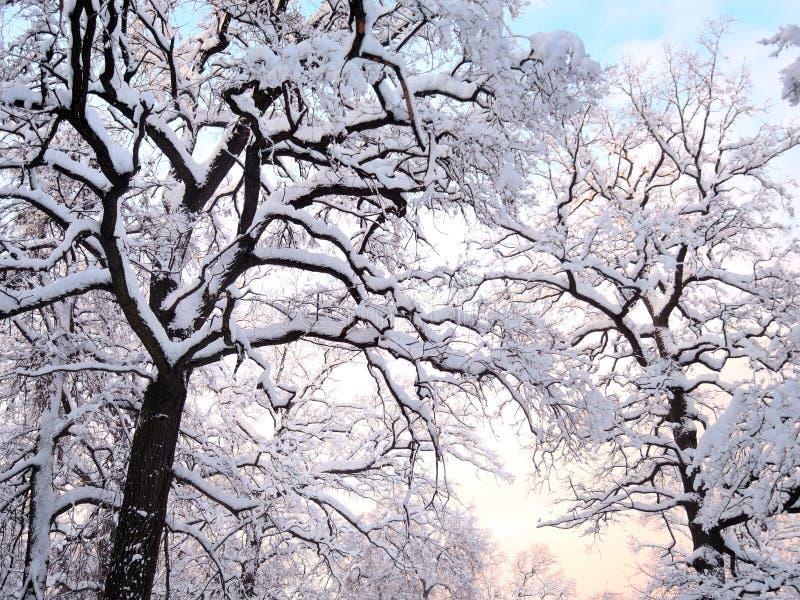 Zim drzewa fotografia stock