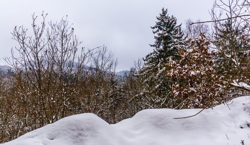 Zim drzewa i fotografia royalty free