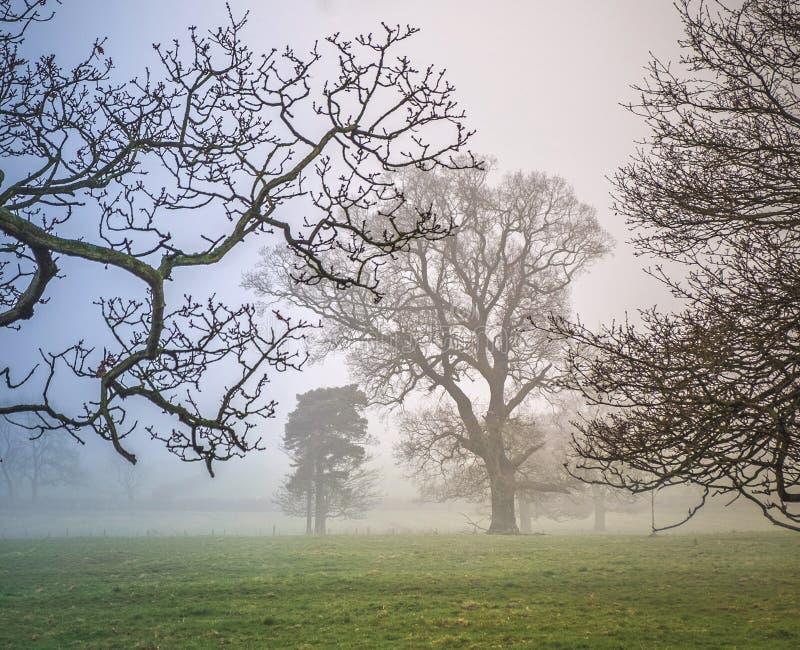 Zim drzewa w mglistym parkland zdjęcia royalty free