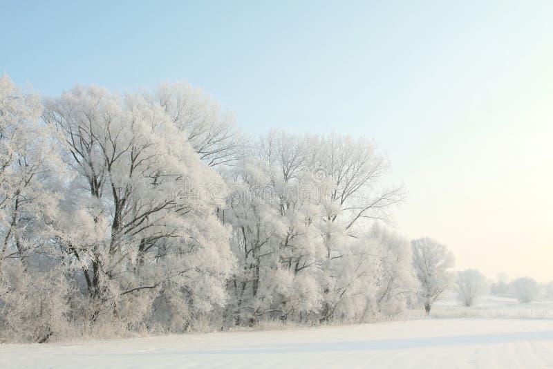 Zim drzewa w polu przeciw niebieskiemu niebu fotografia stock