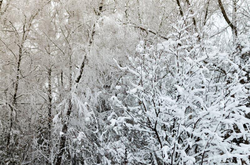 Zim drzewa z lodowatym bielem rozgałęziają się w parku obrazy stock