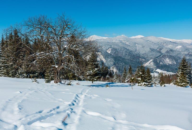 Zim Karpackich gór śnieżny widok od wysokogórskiego plateau Garde zdjęcia royalty free