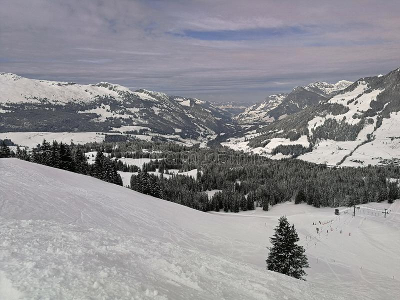 Zim sosny i nakrywać góry w Hoch-Ybrig, Szwajcaria zdjęcie royalty free