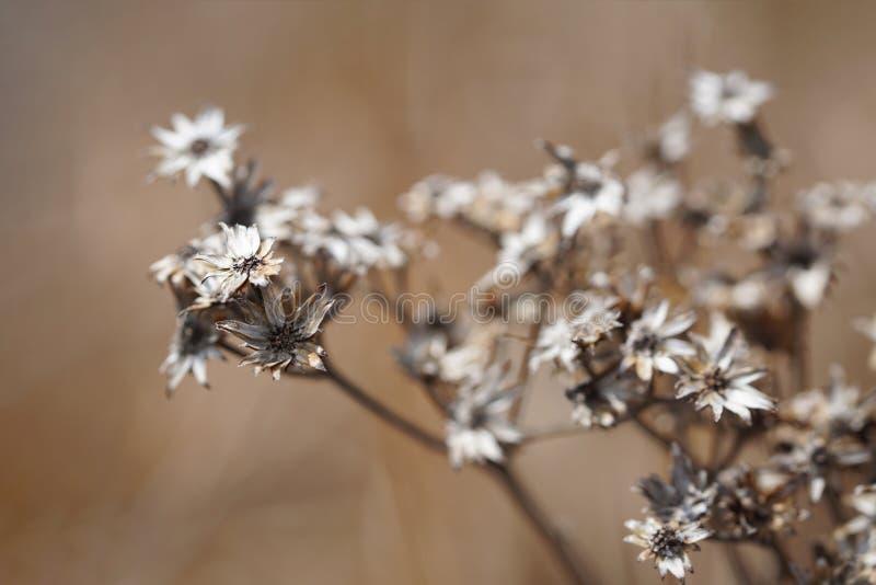 Zim Wildflowers zdjęcie stock