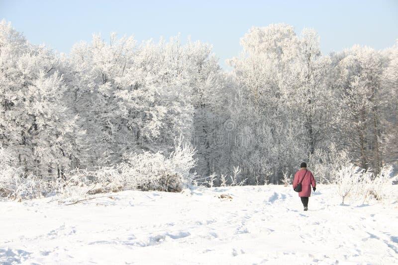 zima ścieżki obraz royalty free