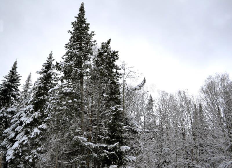 Zima śnieg na gałąź Dwa fotografia stock