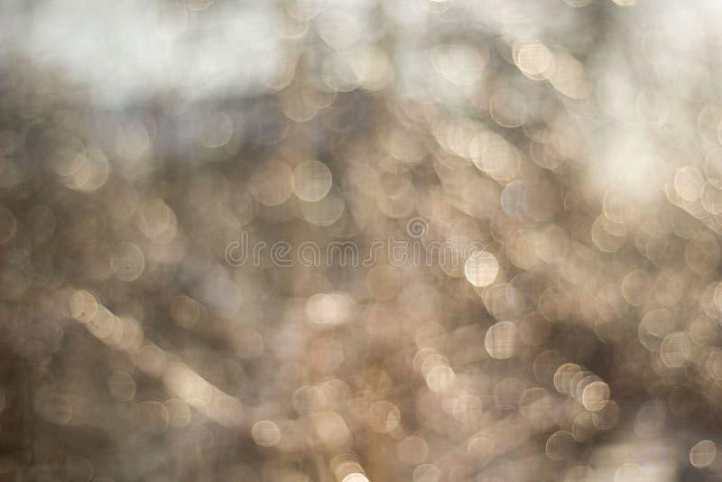 zima śnieg zamazywał tło w miasto parku, opad śniegu w lesie, gałąź i krzaki zakrywających z śniegiem, zdjęcie royalty free