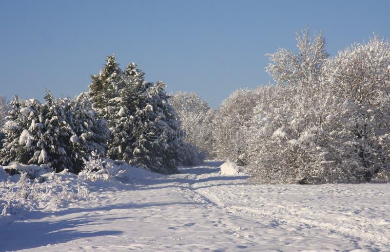 Zima śniegu krajobraz, Cardiff, UK obraz stock
