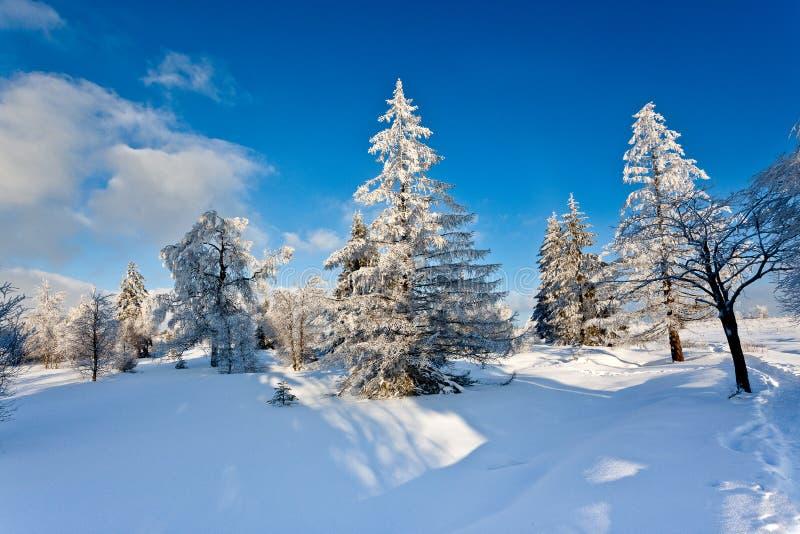 Zima śniegu krajobraz, Wysocy Fens, Belgia zdjęcie royalty free