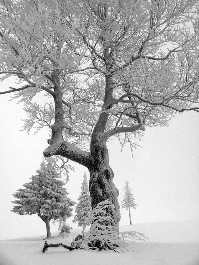 Download Zima zdjęcie stock. Obraz złożonej z ranek, park, podwyżka - 127274