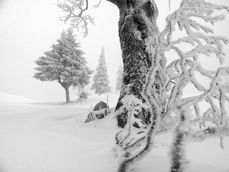 Download Zima obraz stock. Obraz złożonej z mgła, hoar, czysty, skorupa - 127275