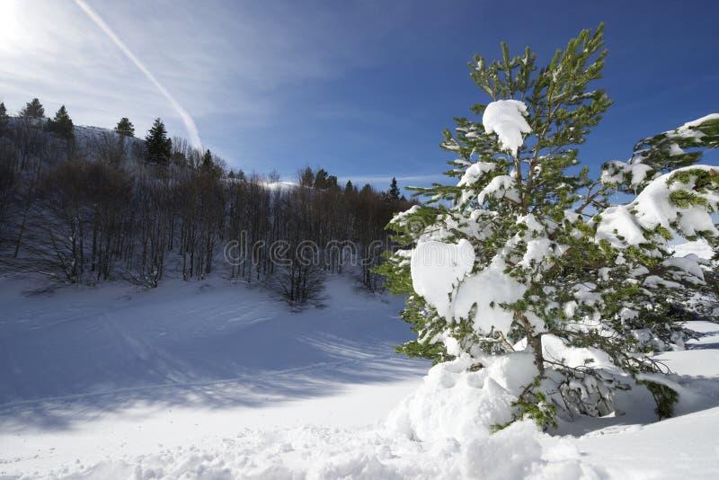 Download Zima obraz stock. Obraz złożonej z góra, teren, natura - 28967871
