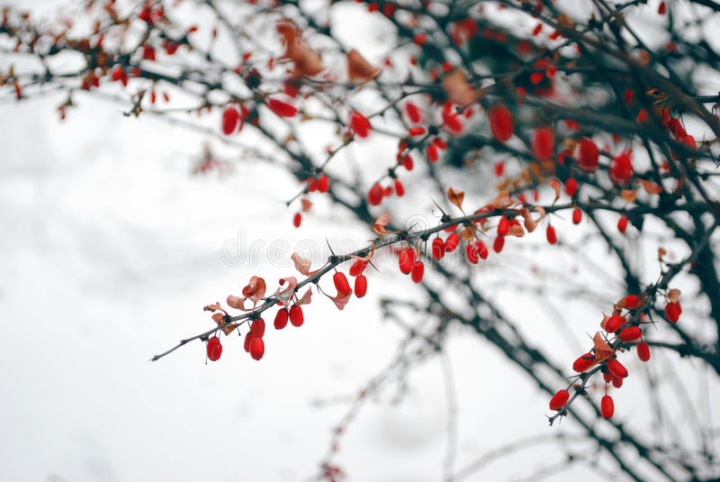 Zima fotografia royalty free