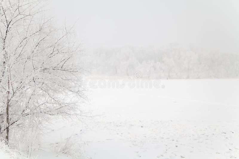 Zima bielu jałowy krajobraz zdjęcie royalty free