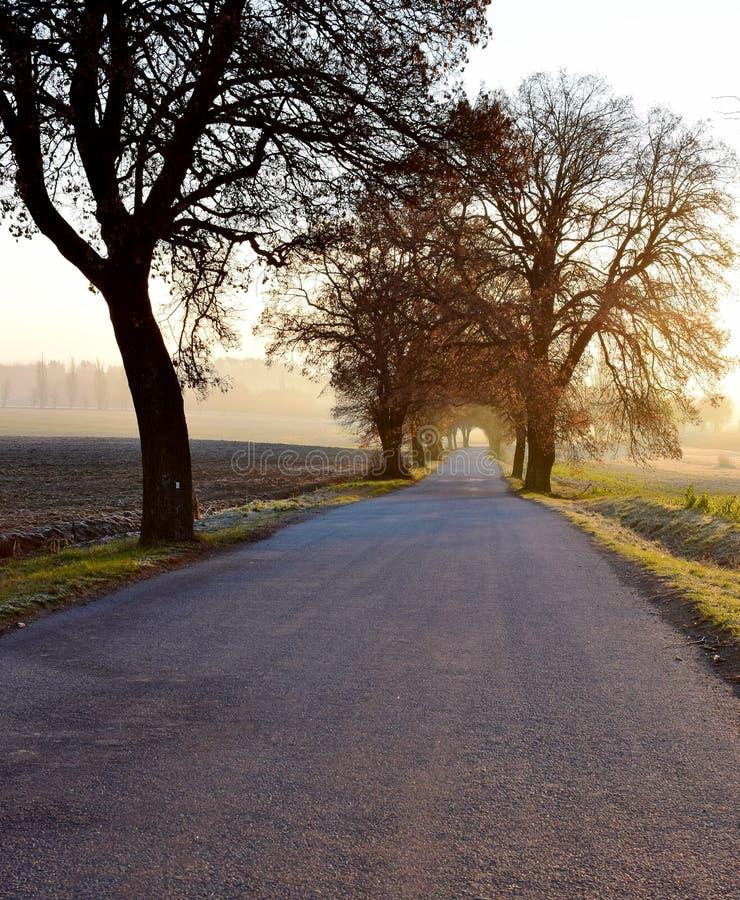 Zima chłodny ranek w drodze z wschód słońca obrazy stock
