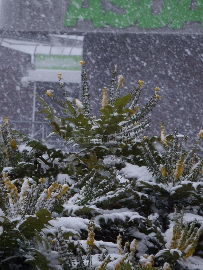 Zima cudu ziemia zdjęcia stock