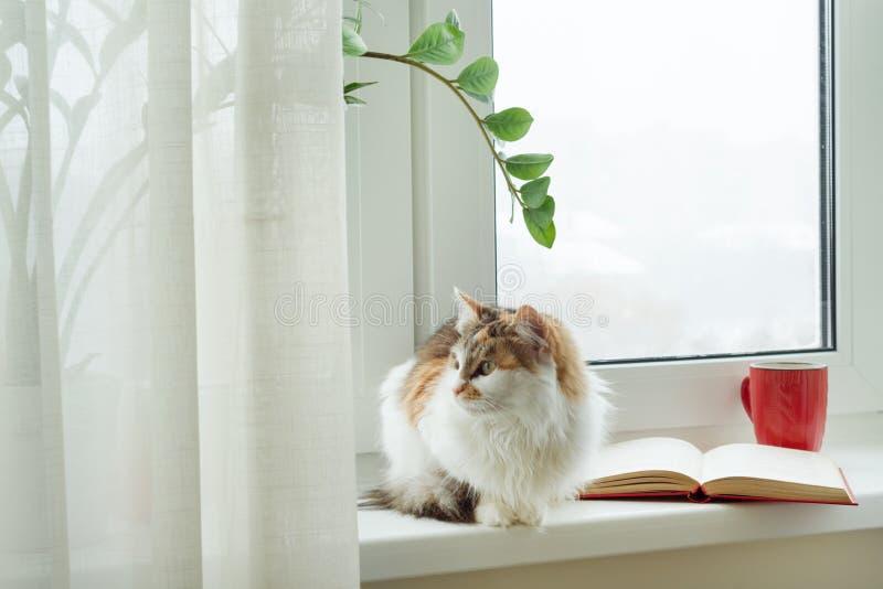 Zima czas, kota obsiadanie na windowsill patrzeje z śnieżnego okno Na windowsill otwartej filiżance z gorącym napojem i książce obraz royalty free