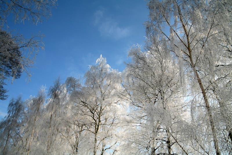 zima denmark zdjęcie stock