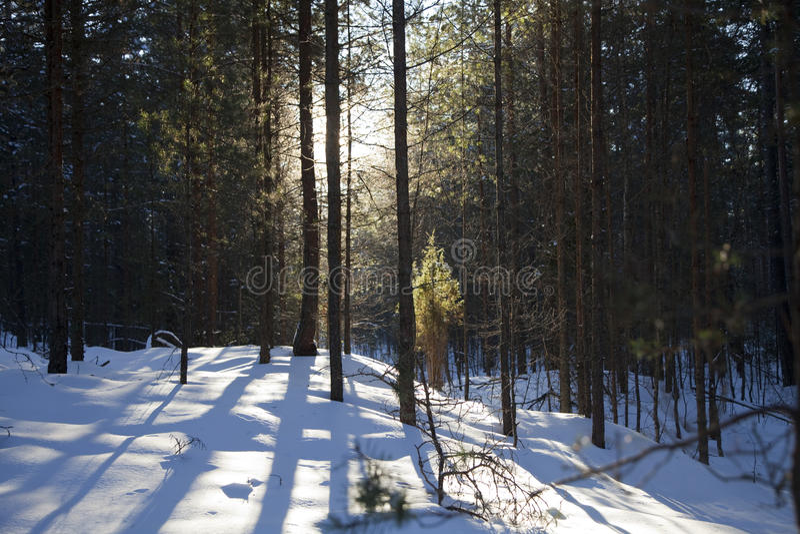 Download Zima drewna zdjęcie stock. Obraz złożonej z promień, naturalny - 13325026