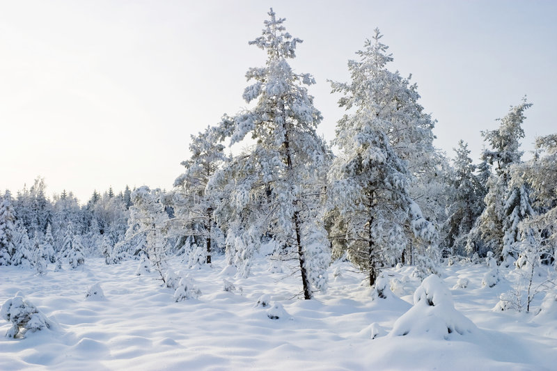 zima drewna zdjęcie royalty free