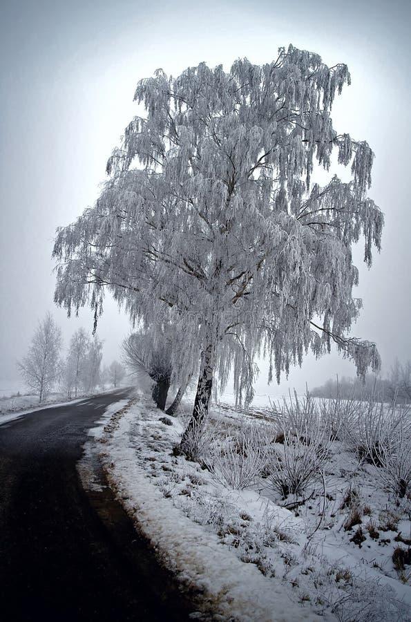 zima drzew obraz royalty free