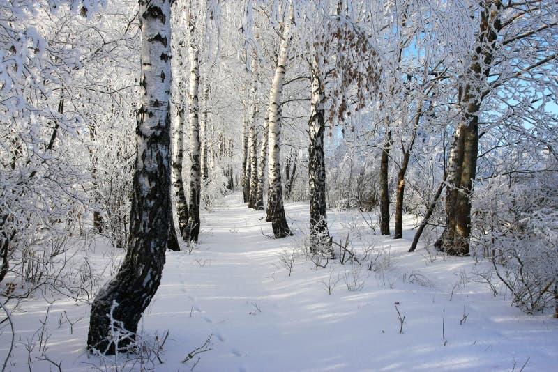 zima drzew obrazy stock