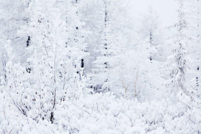 Zima drzewa obrazy royalty free