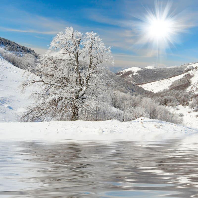 Zima drzewa obrazy stock