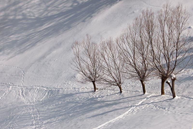 Zima drzewa krajobraz i obraz royalty free