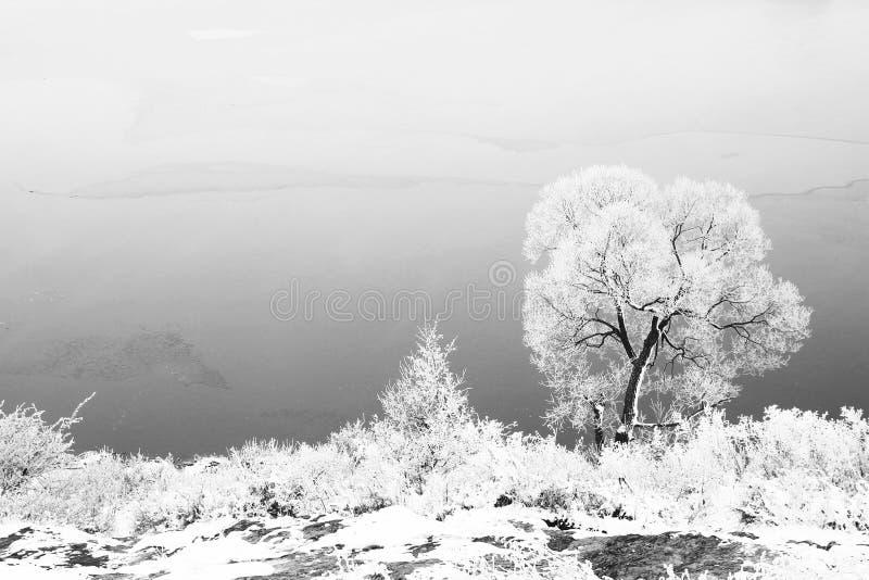 Zima drzewny bagażnik w naturze w zimie obrazy royalty free