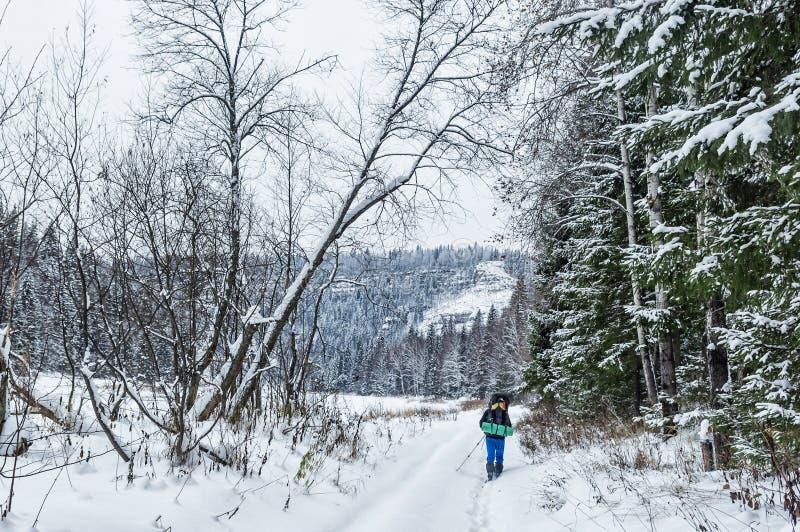 Zima dzień w drewnach obraz stock