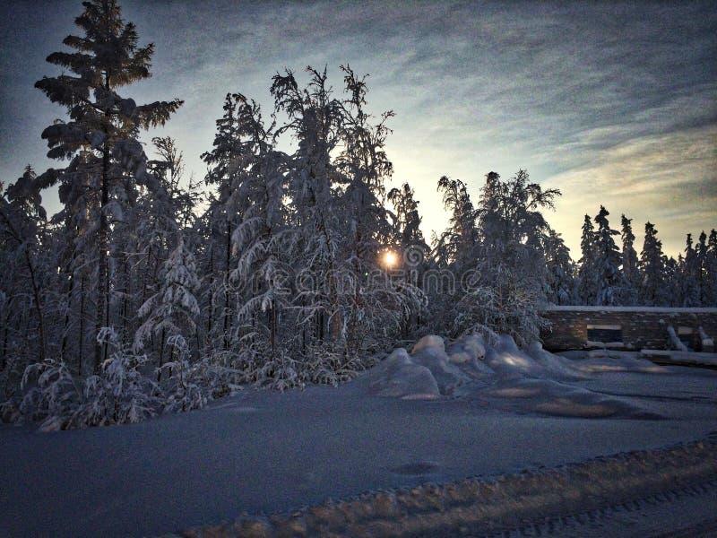 Zima dzień w lesie obraz stock