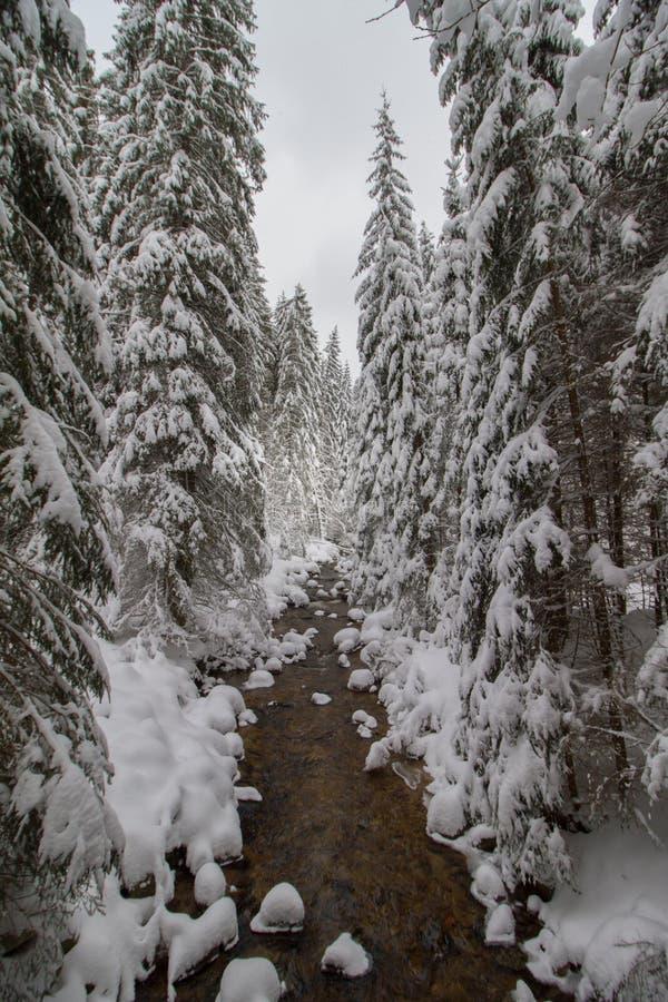 Zima halny strumień z skałami w lesie zakrywającym śniegiem obrazy stock
